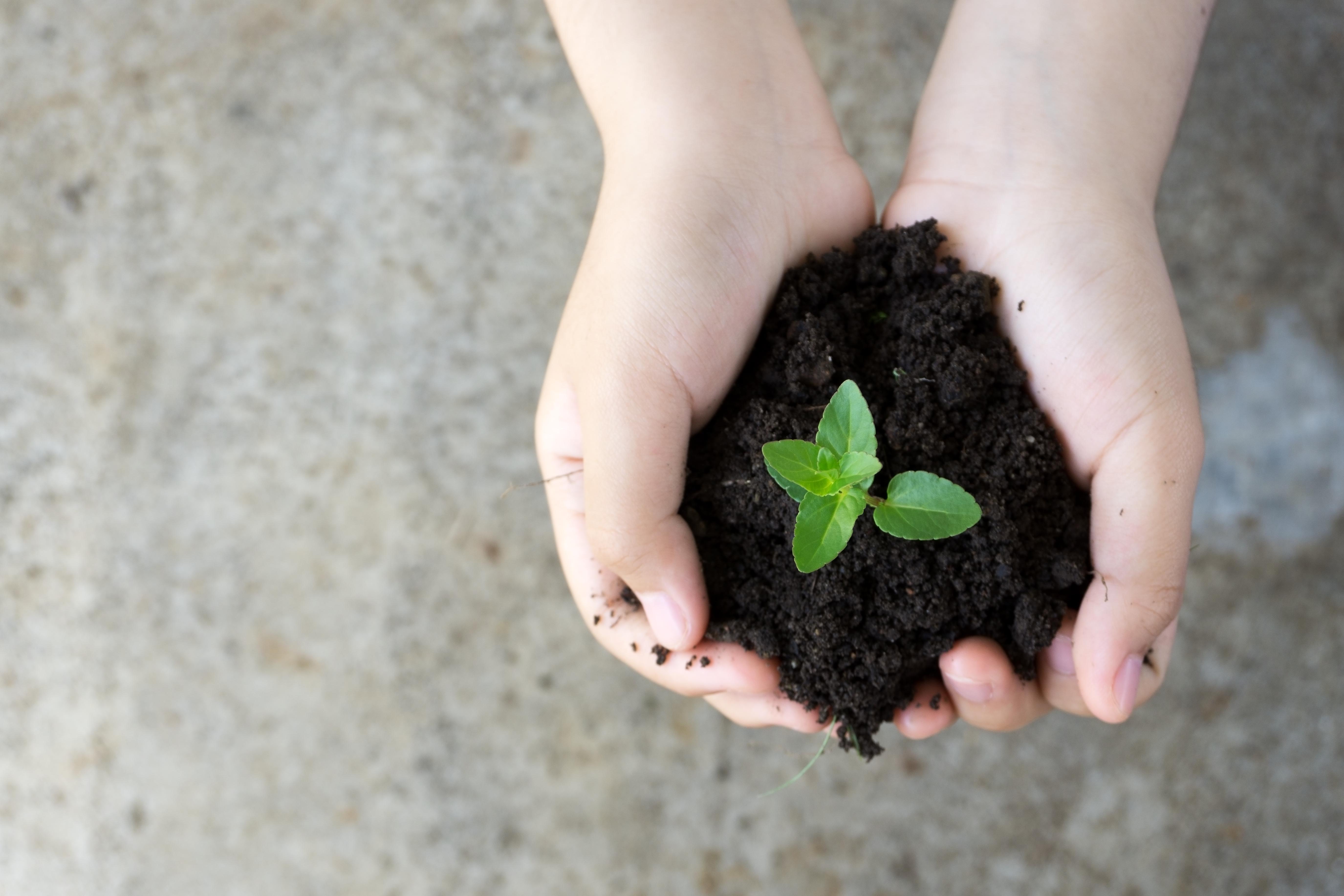Zwei Hände halten ein bisschen Erde. Darin ist eine kleine Pflanze zu sehen. Das Bild untermauert noch einmal die Wichtigkeit nachhaltiger Beschaffung.